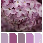 wedding palette-frangipanis