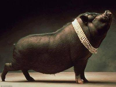Pearls Before Swine – a very proud piggy.