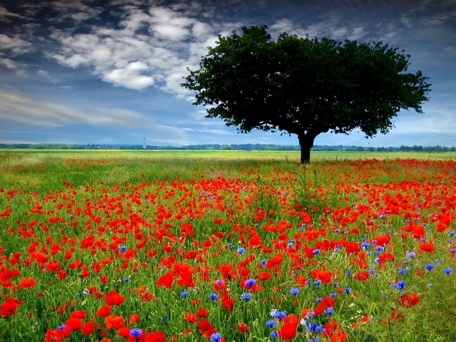 Remembrance Day 11-11