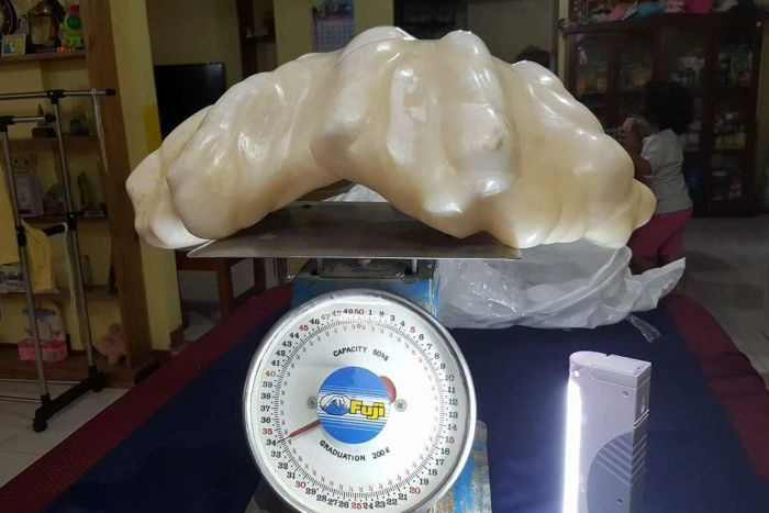 World's Largest Pearl 34 kg